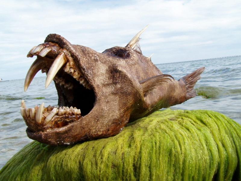фото морского змея чудовище